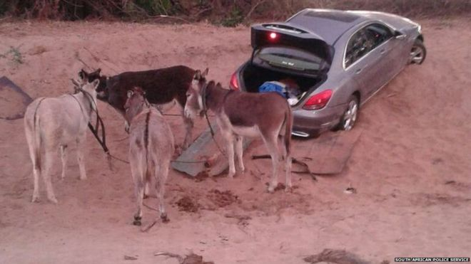Car thieves getting smarter, they are using donkeys to smuggle cars across the border